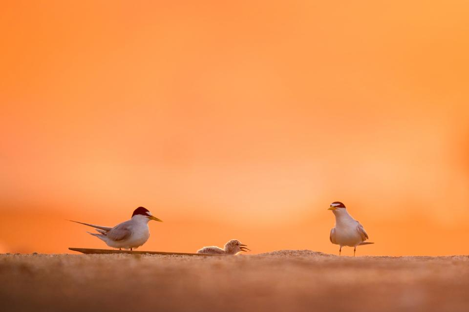 birds animal orange sky sand blur nature
