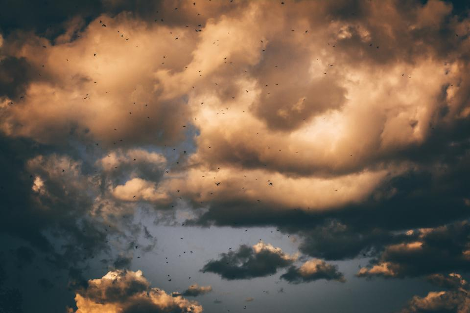 dark sky clouds birds flying animal