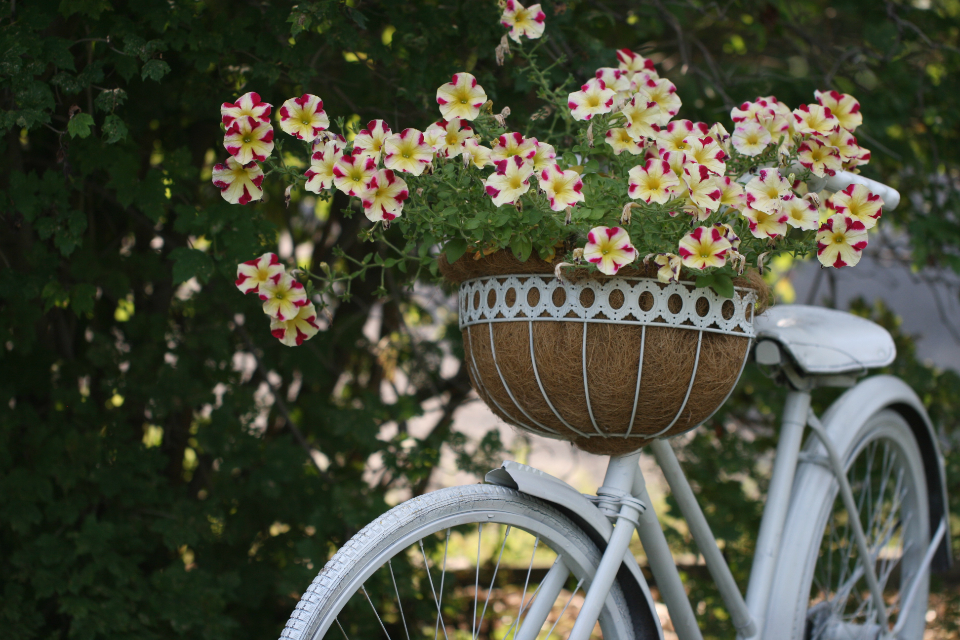 old bicycle flowers retro decoration basket flower vintage outdoors antique white summer plant nature