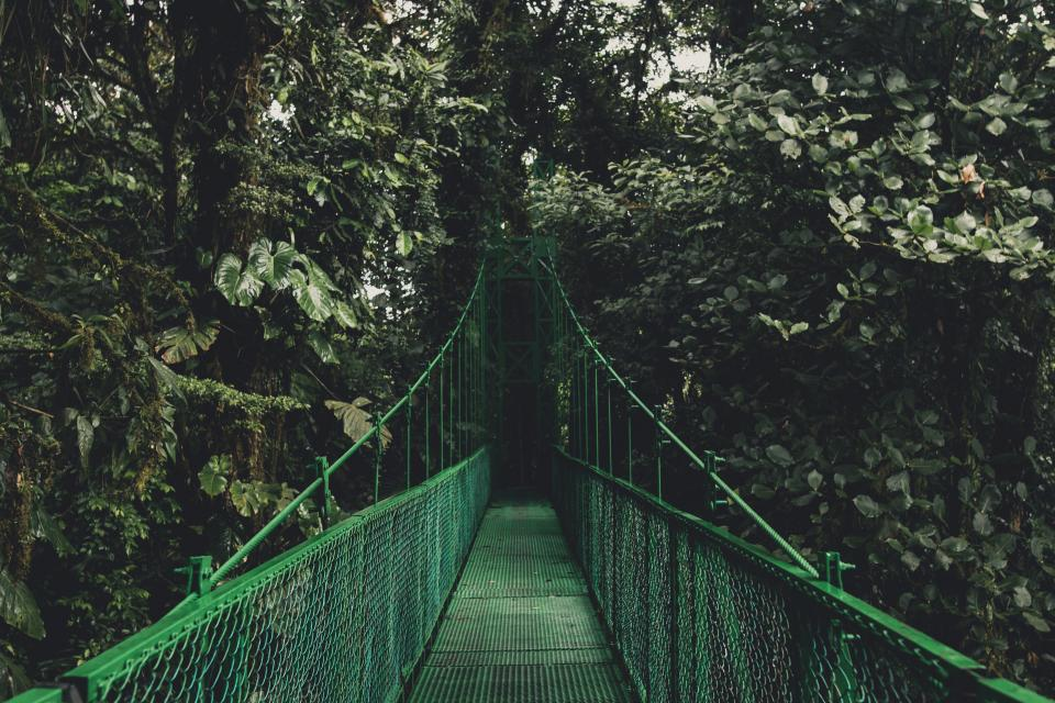 green trees plants nature outdoor travel hanging bridge