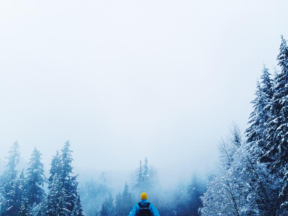 people man guy back alone travel trip adventure snow fog ice frozen trees plants pine forest nature