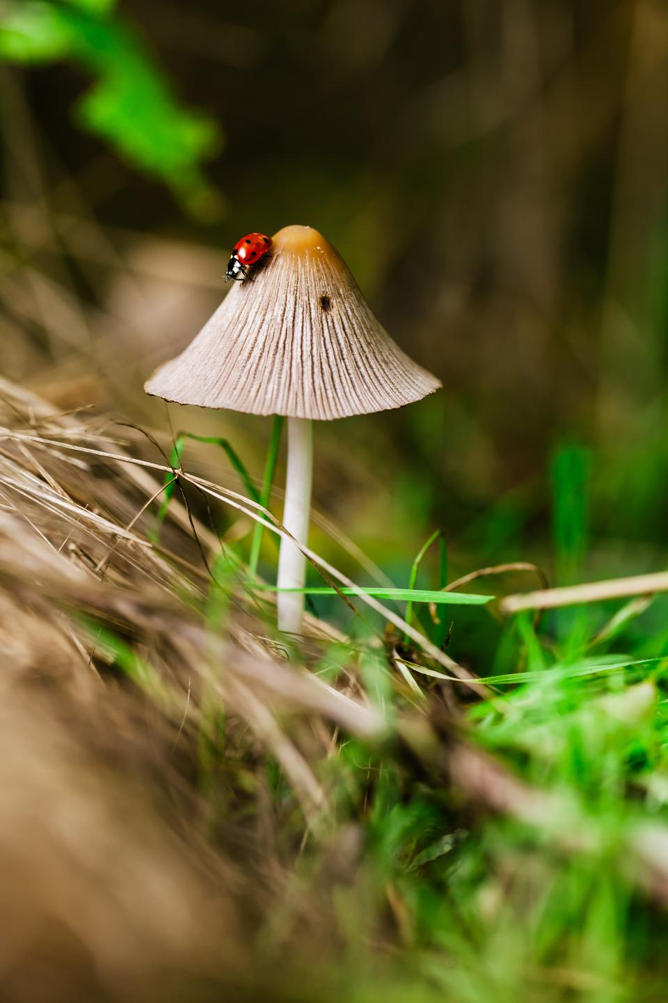 plants nature mushrooms grass insect ladybug still bokeh