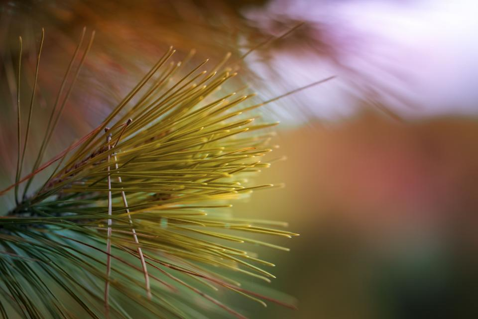 green grass tree plant blur