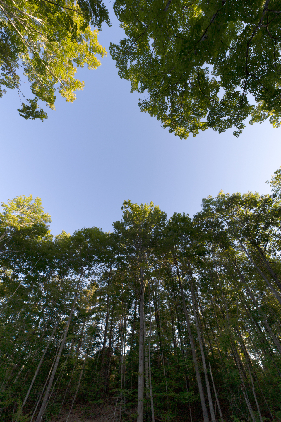 forest sky view tall trees nature growth green outdoors landscape wood environment