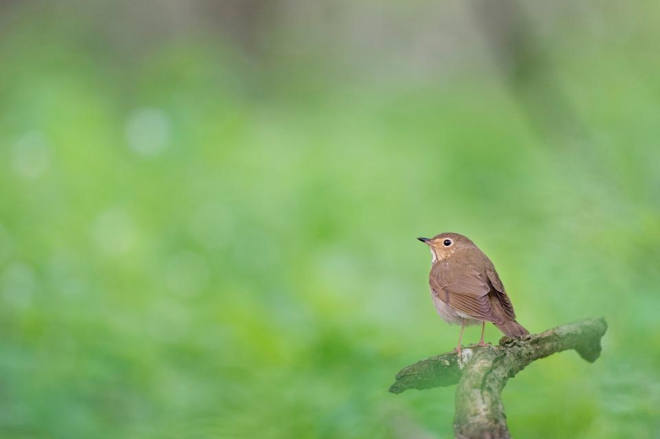 bird animal branch wood green nature bokeh blur