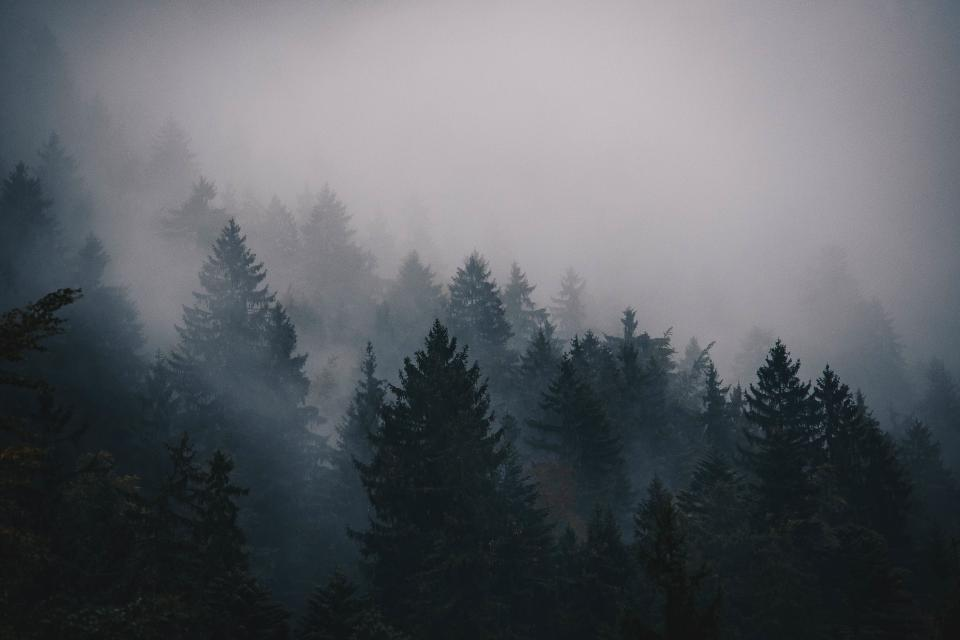 fog cold trees pines mountain landscape sky nature spruce forest woods