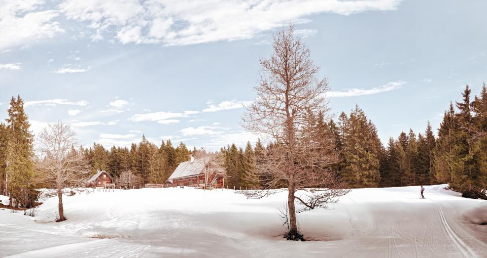 house trees winter snow plant nature outdoor clouds sky