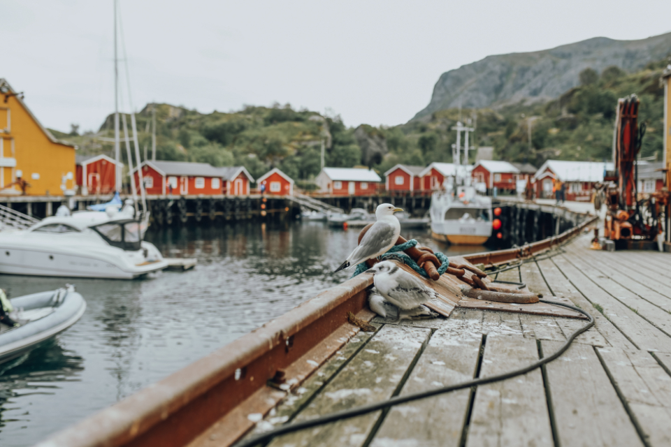 norway fishing village lofoten seagulls buildings boats water mountains travel tourism harbor sea