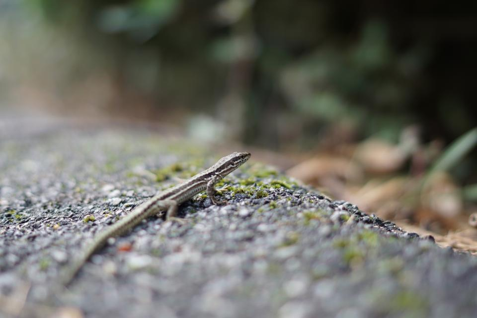 outdoor nature blur lizard reptile animal