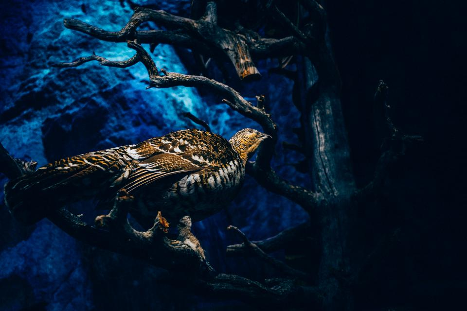 tree branch plant nature dark bird animal