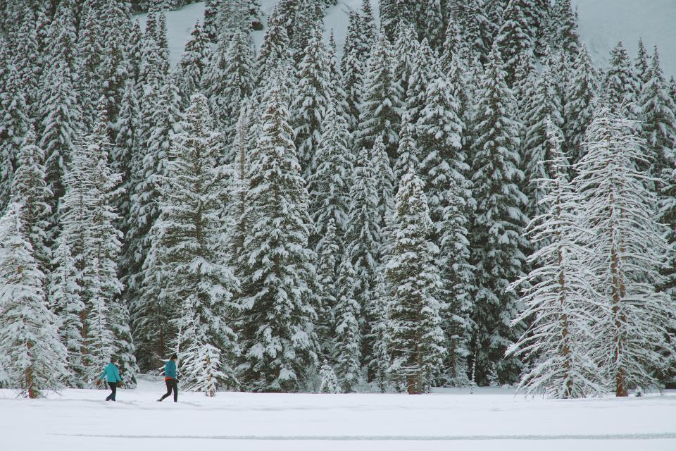 snow winter white cold weather ice trees plants nature woods forest people man travel adventure