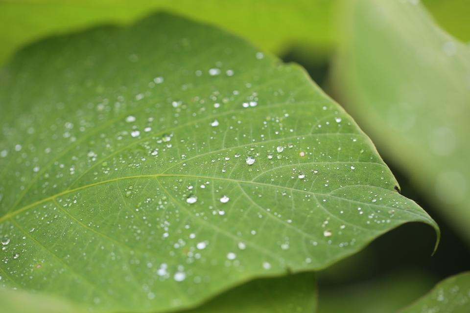 nature landscape green leaves veins water drop rain