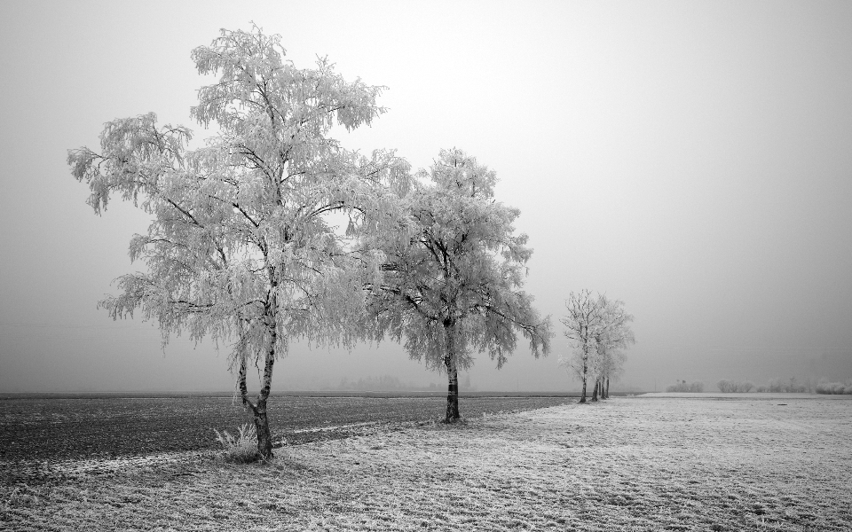 nature snow trees landscape winter snow ice cold freezing grass frost fog horizon