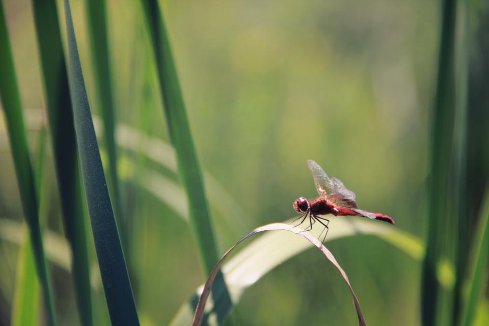 insect green leaves grass nature small dragonfly