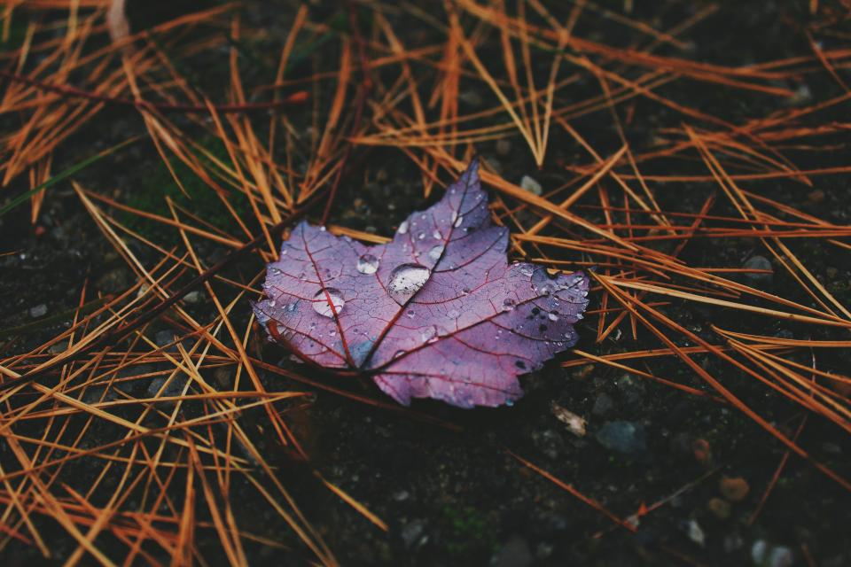 wet leaf purple raindrops outdoor stick autumn fall