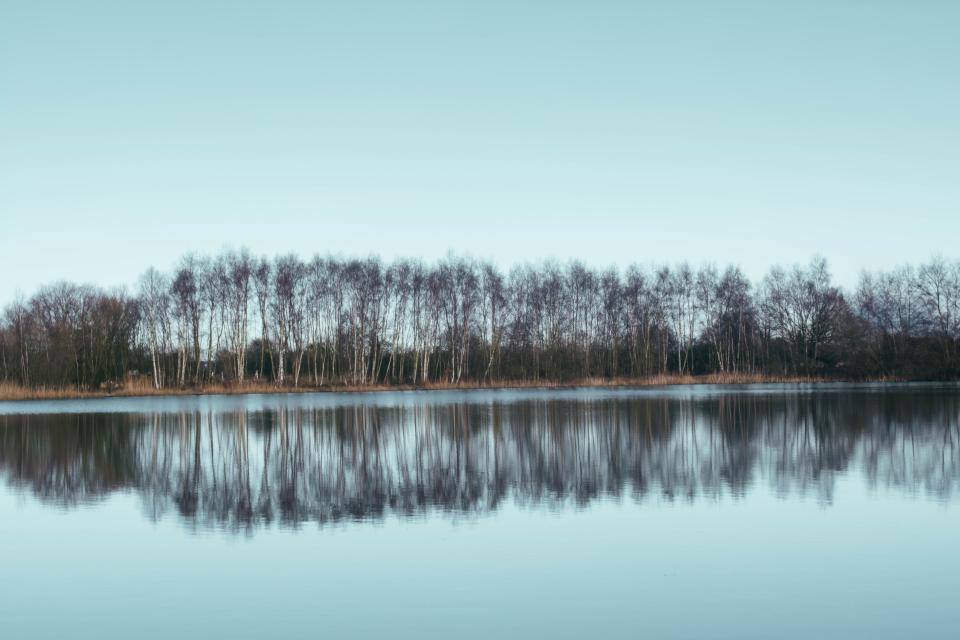 trees reflection water lake trunks branches grass sky nature autumn