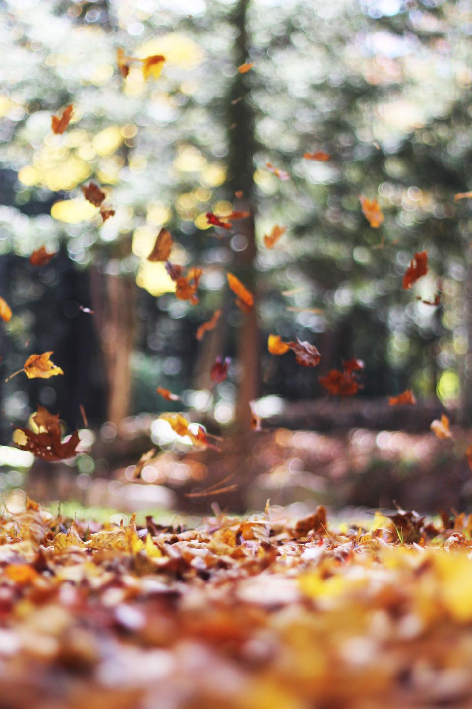 trees plant leaf fall autumn outdoor blur bokeh