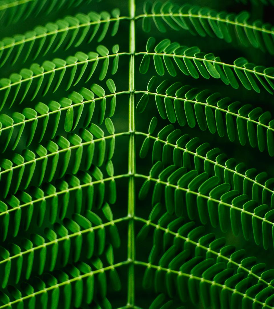 leaves green plant garden leaf dark highlight