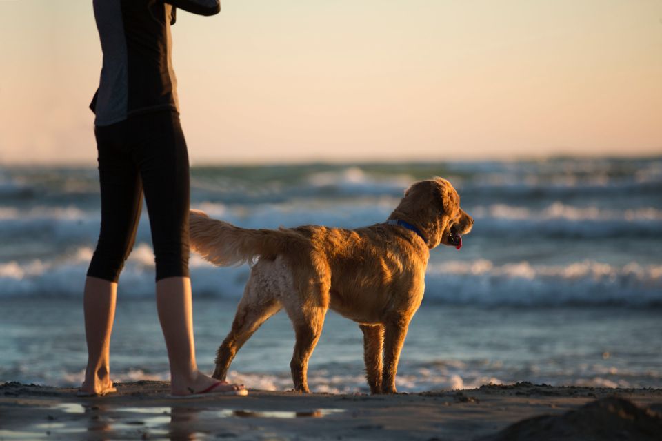 woman dog beach sea ocean retriever labrador golden golden hour leggings waves surf sand