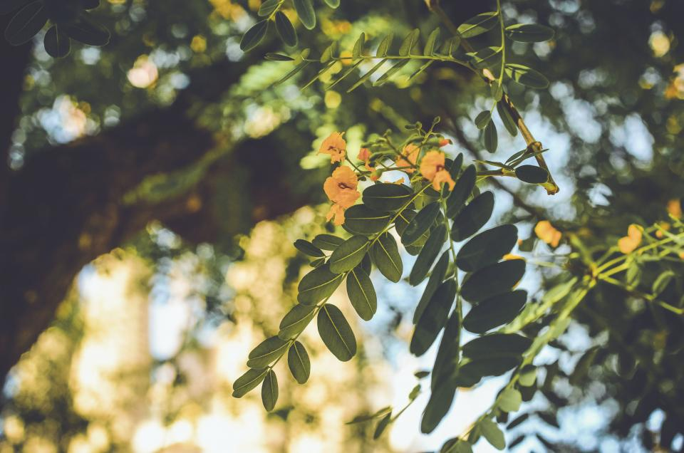 nature leaves green trees bokeh flower yellow