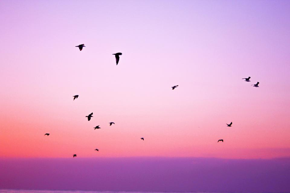 pink purple sky birds flying animals sunset dusk