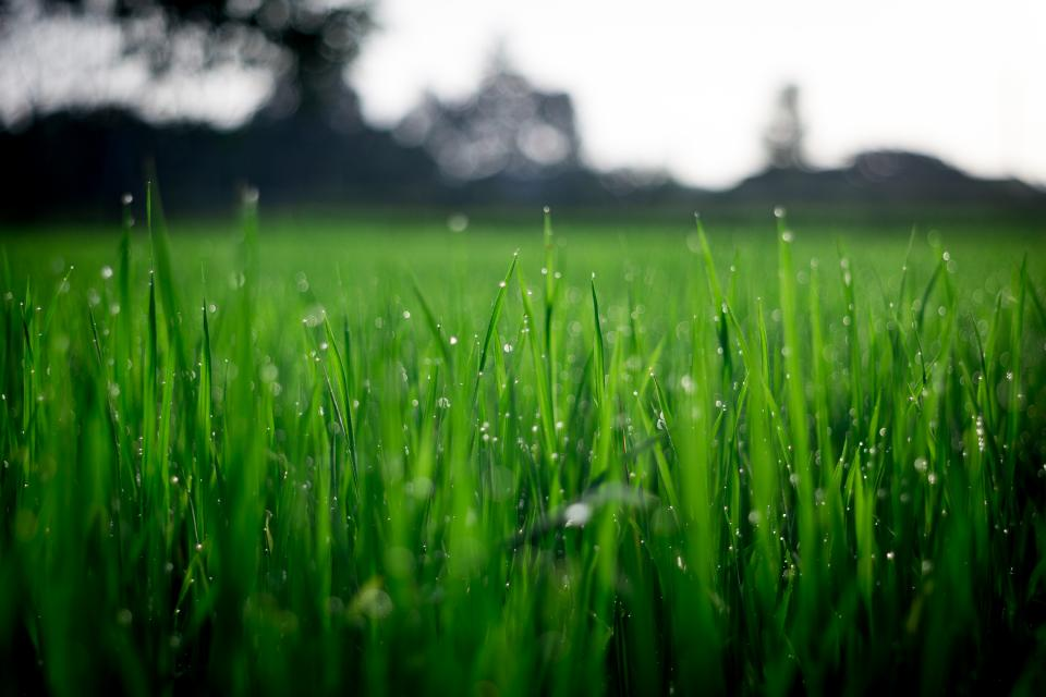 green plant grass agriculture crops nature field farm backyard blur bokeh water raindrops