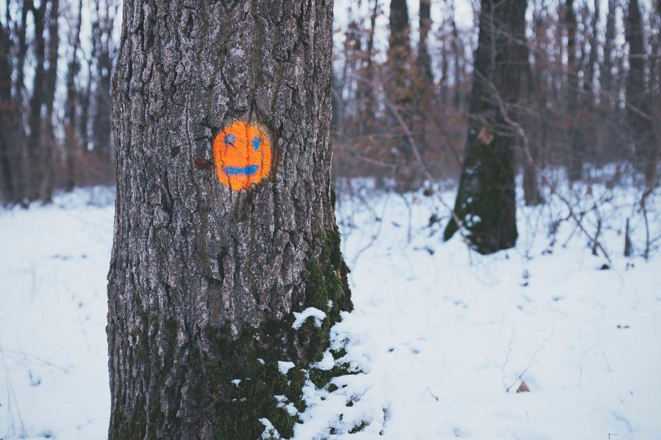 trees orange face drawing snow forest woods smile