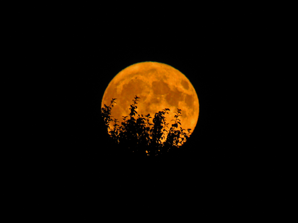 full moon orange trees silhouette night outdoors nature sky space craters supermoon