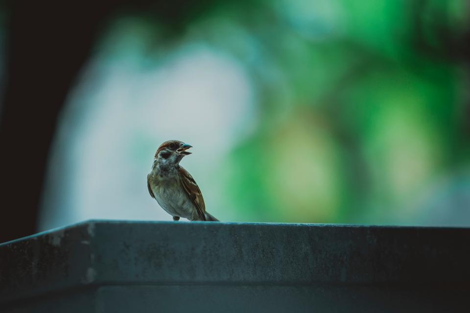 bird animal bokeh blur wings beak nature concrete trees