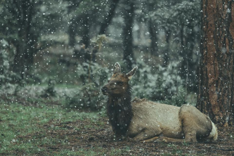 animal wildlife forest nature snow winter