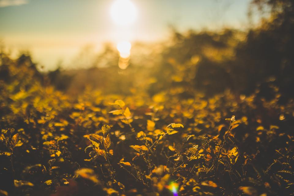 leaves plants nature outdoors sunlight sunset fall autumn