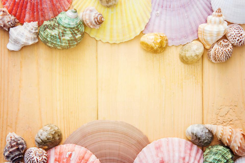 colorful shell calm decor design