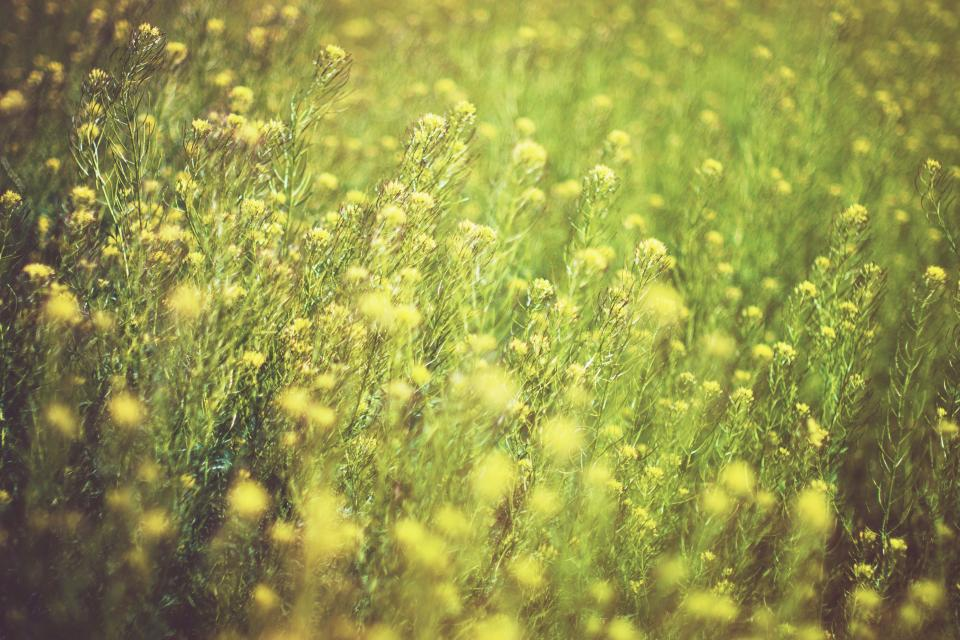 yellow green flowers farm yard field garden outdoor blur