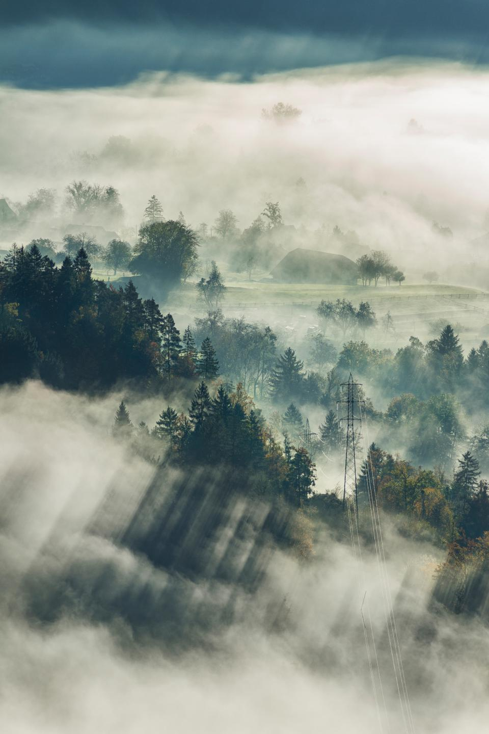 fog trees plant nature mountain highland cloud landscape