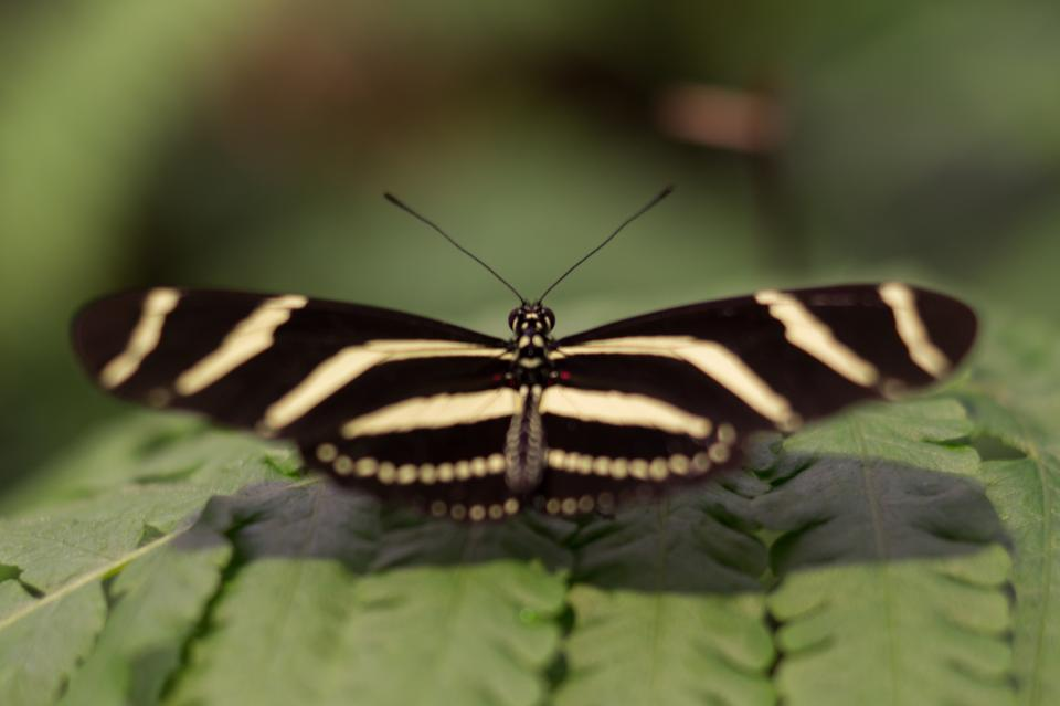 free photo of butterfly  wings
