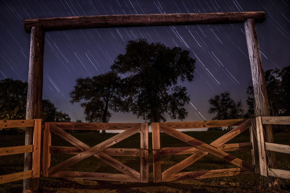 tree plant nature dark night atmosphere wooden fence