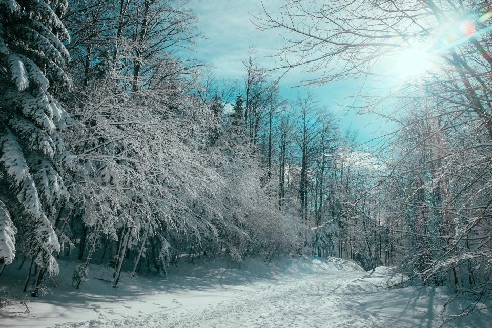 nature landscape trees forest woods snow winter white weather cold sun blue clouds sky