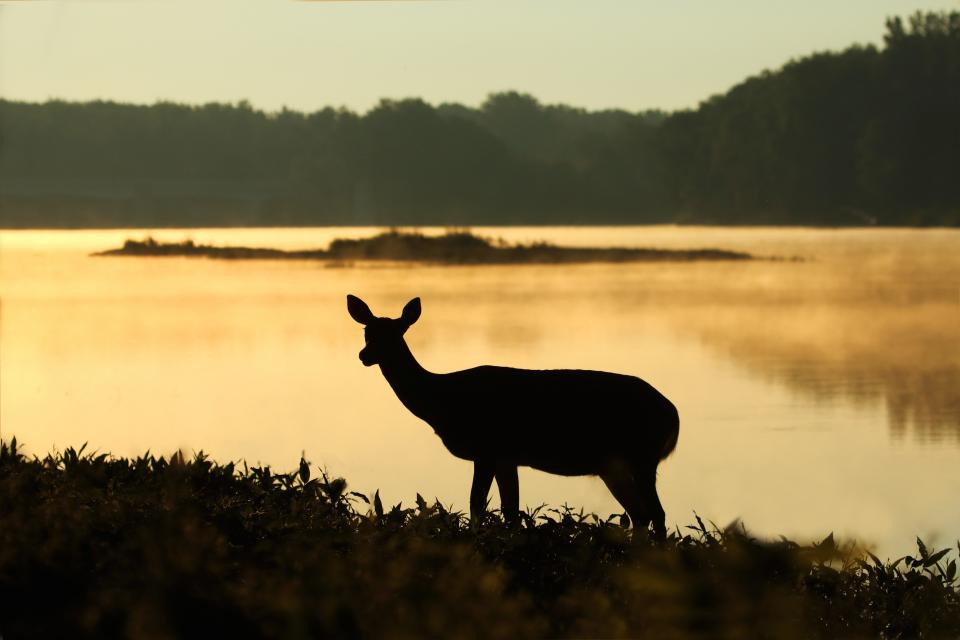 deer silhouette sunset wildlife forest woods grass water river lake