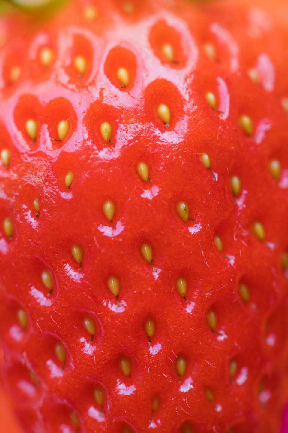 background berry closeup delicious dessert detox diet energy food fresh freshness fruit healthy ingredient juicy macro natural nutrition nutritious organic pattern raw red refreshment ripe season seasonal seed seeds strawberry sweet taste