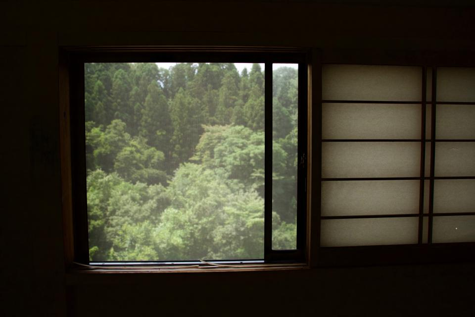 window nature trees green mountain woods forest
