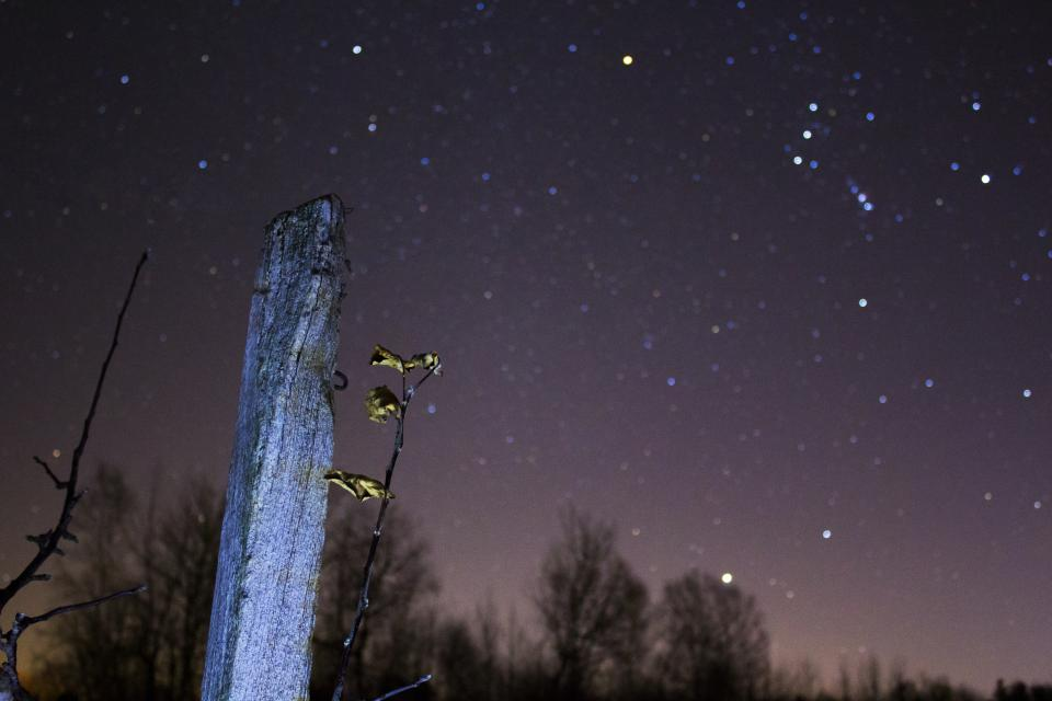 stars dark night constellation nature astrophotography trees woods forest
