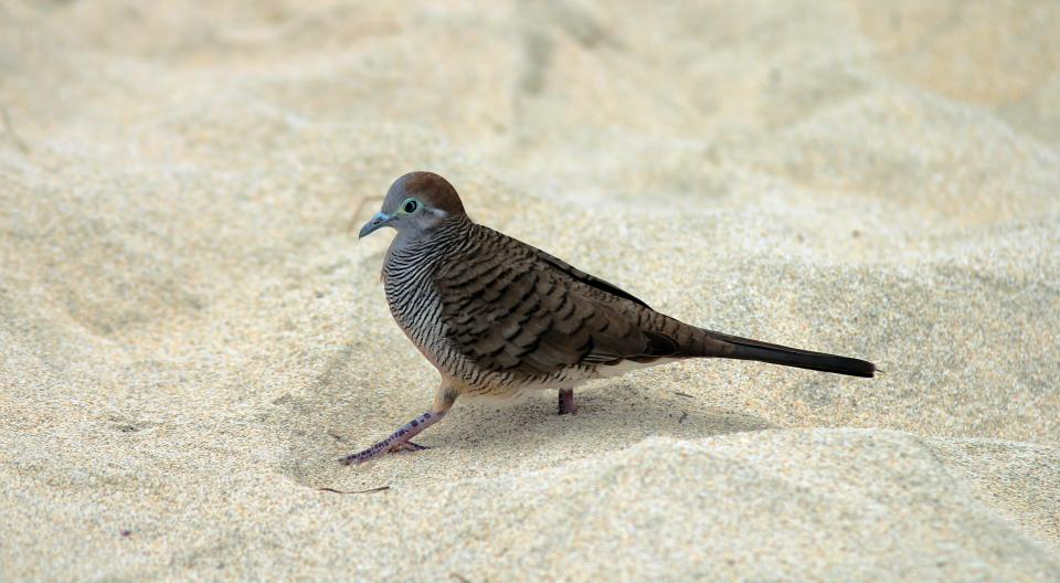 bird animal nature beach white sand