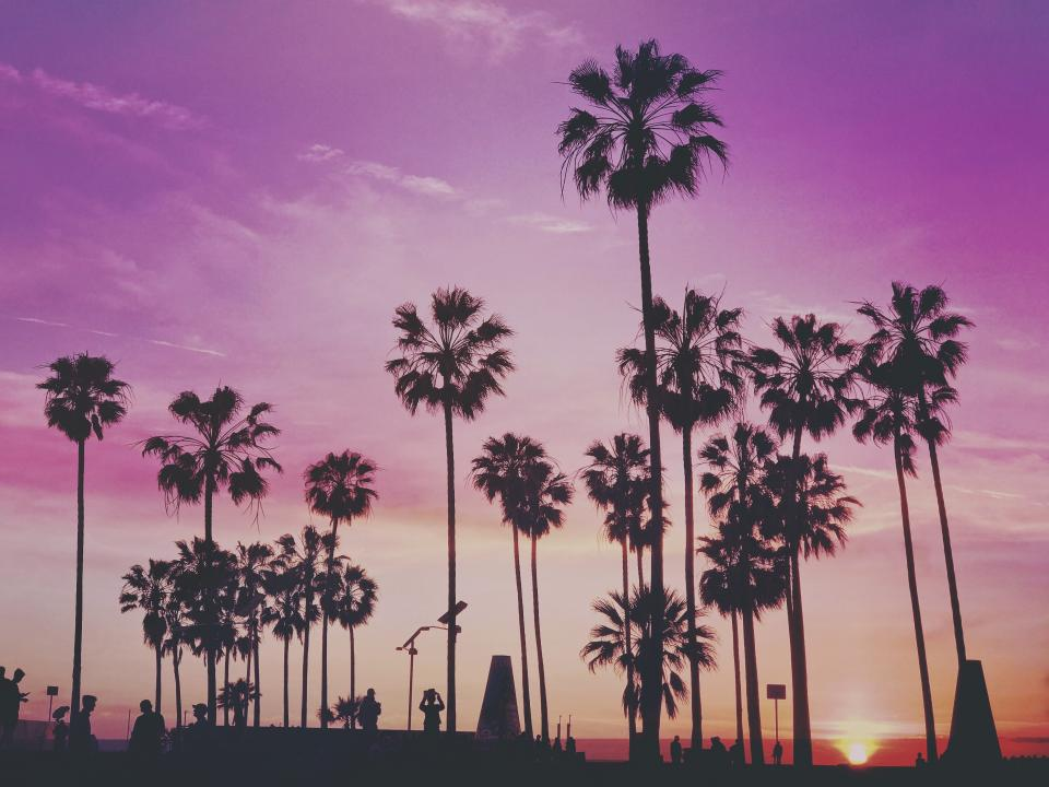 palm trees nature plants purple sky clouds sunset summer