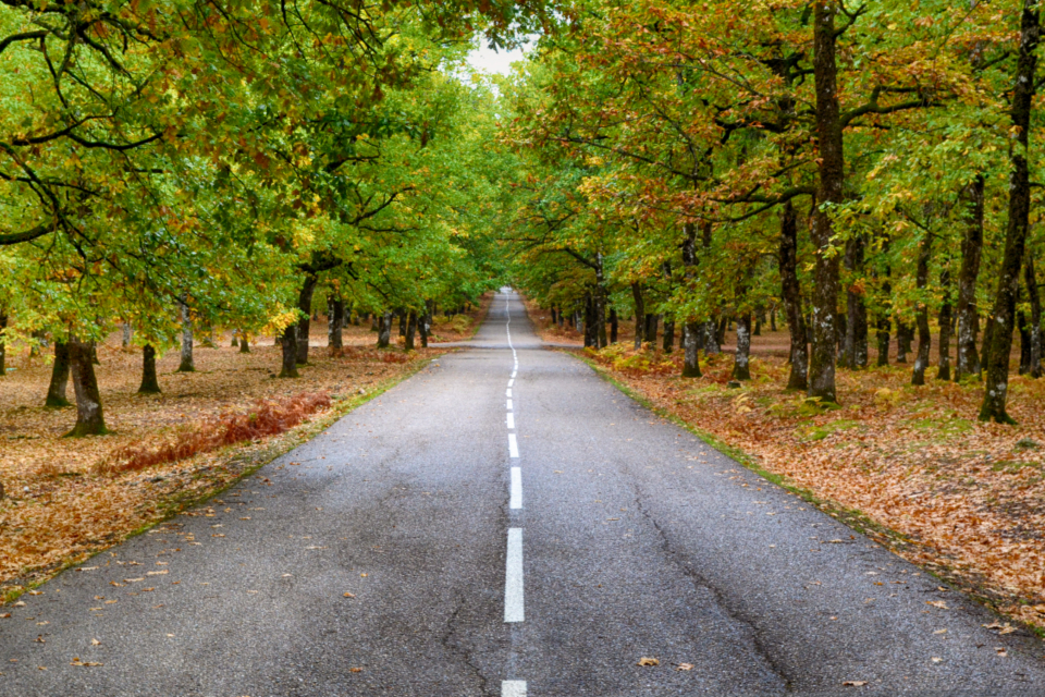 road country nature travel adventure asphalt countryside forest grass green landscape lanes leaves outdoors road rural