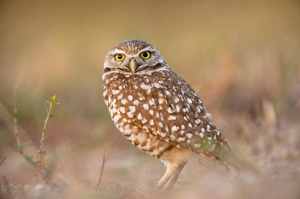 bird beak feather animal fly owl eyes sharp yellow nature landscape blur green grass