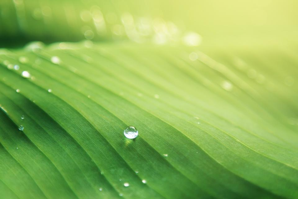 nature green leaf water droplets dew