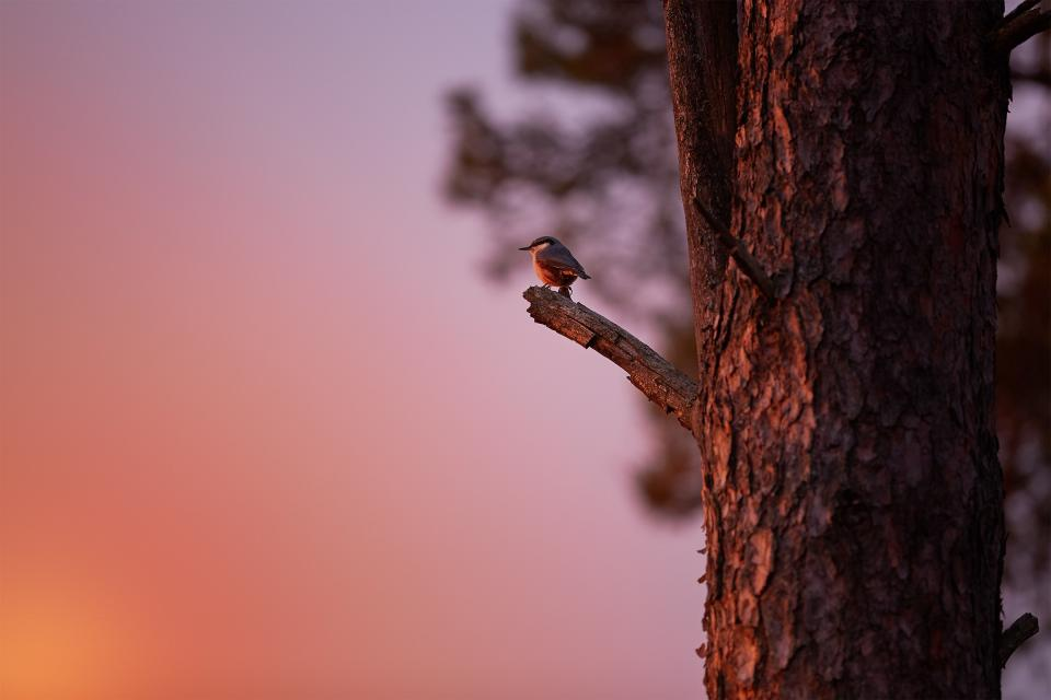 sky sunset tree branch wood bird animal nature blur