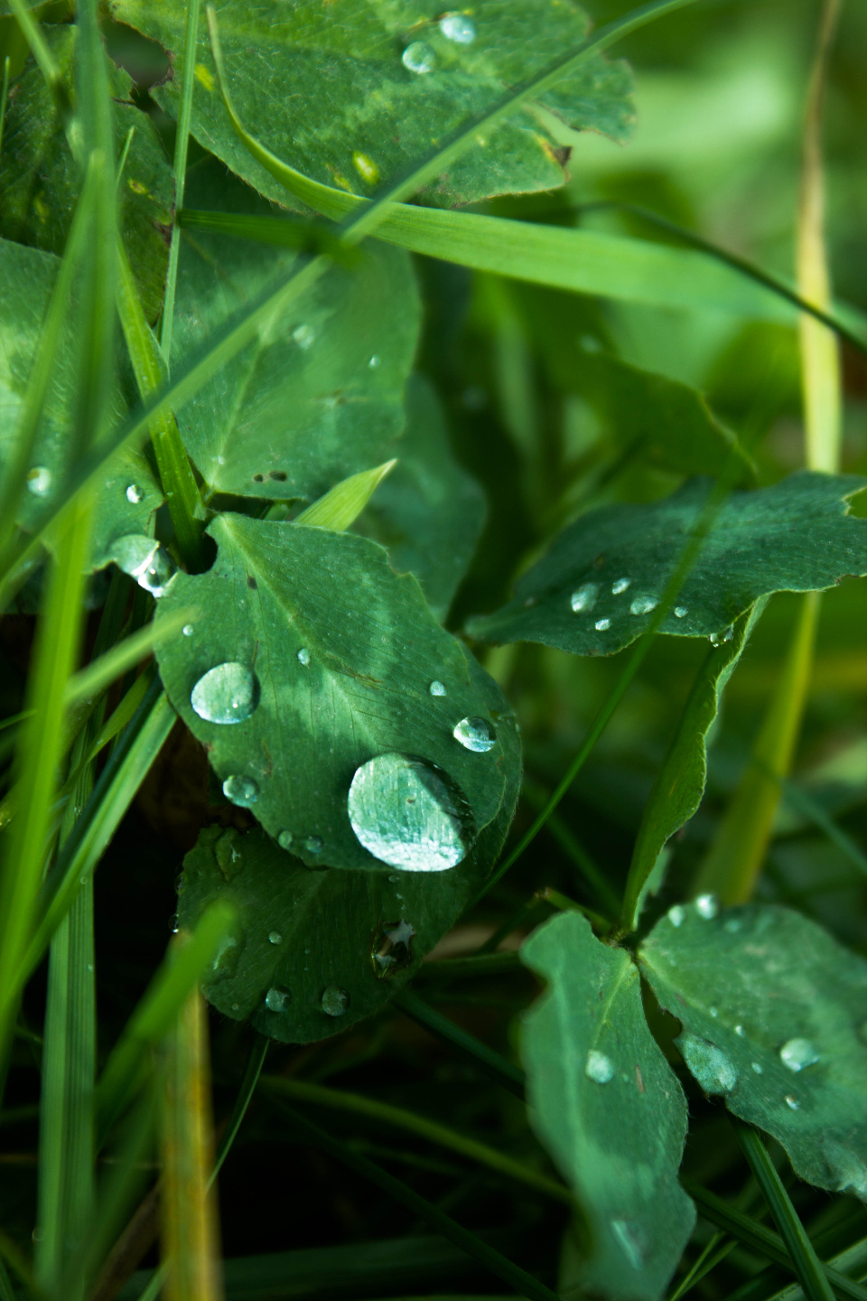 grass plant leaf leaves water drop rain nature close up dew morning
