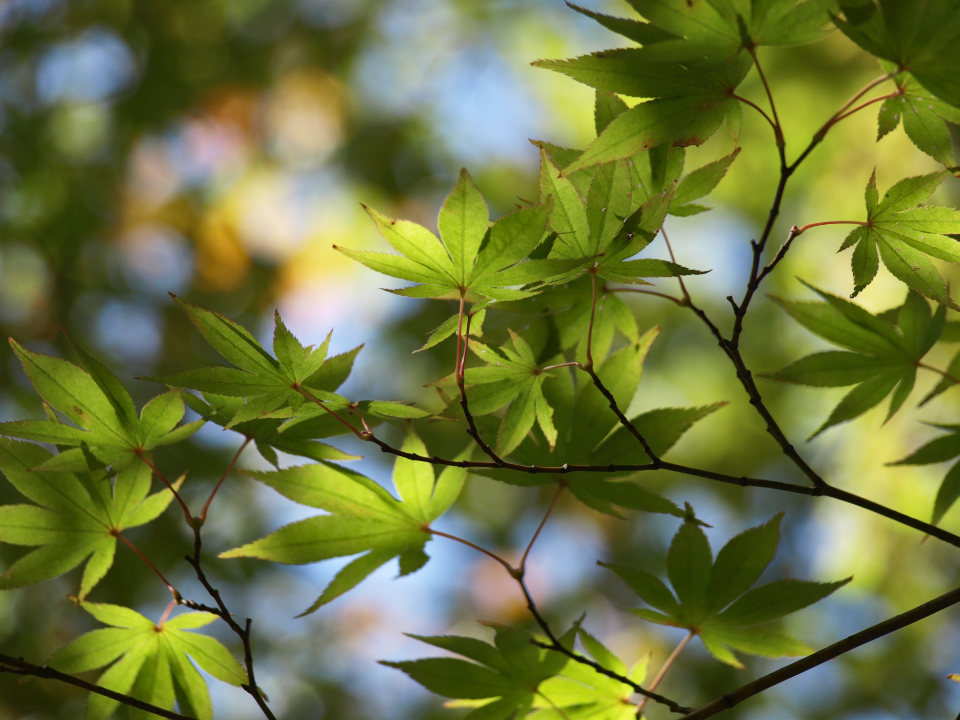 tree leaves background green branch sunny nature outdoors foliage bokeh forest sun branches