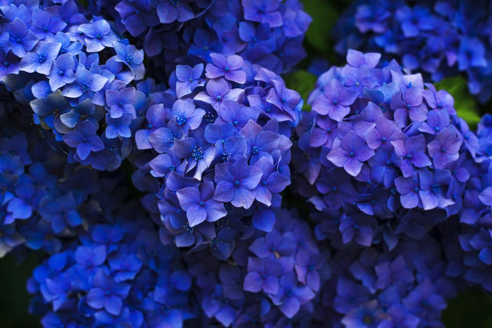 flowers garden nature blue purple